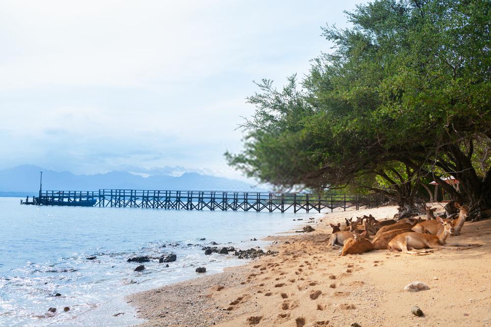 Daya Tarik Pesona Tempat Wisata di Bali Barat 2020